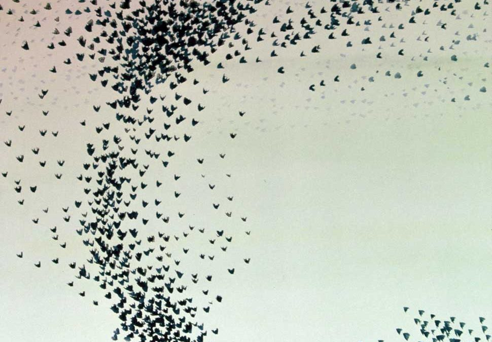 Starling Flight watercolour by Vincent Sheridan1970s
