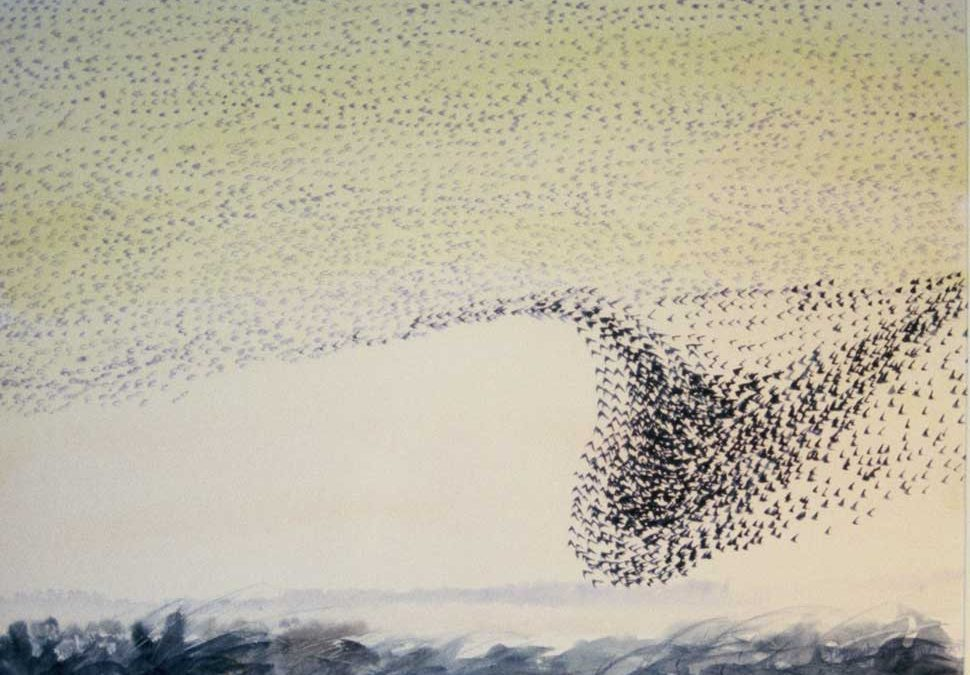 Starlings Balinafagh