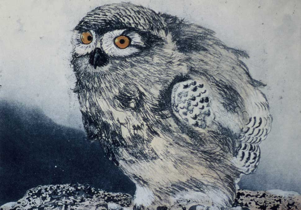 Young Snowy Owl etching by Vincent Sheridan 1980s